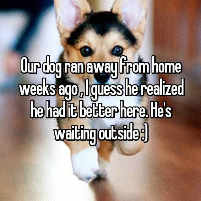 Mammal - Our dog ran away Firom home weeks ago Iquess he reaized he had it better here. Hes waiting outside