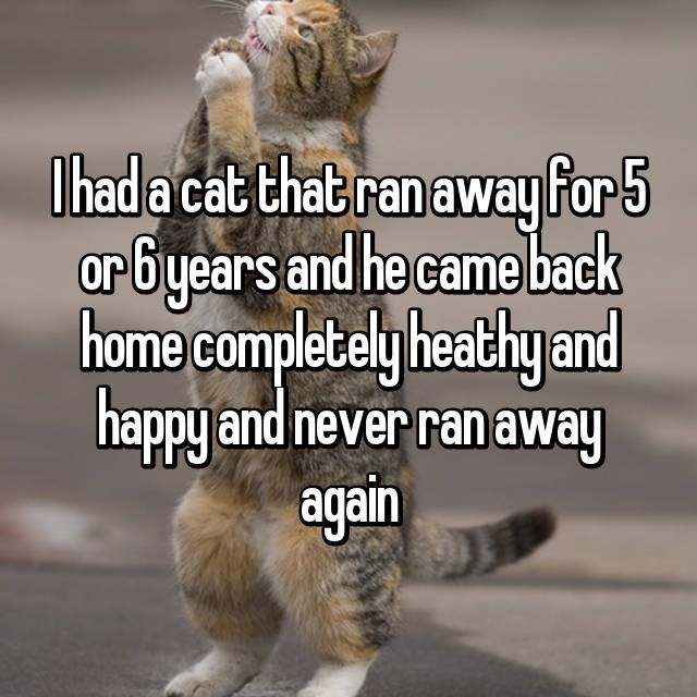 Photo caption - Thad a cat that ranaway for 5 orbyears and he came back home completely heathy and happy and never ranaway again