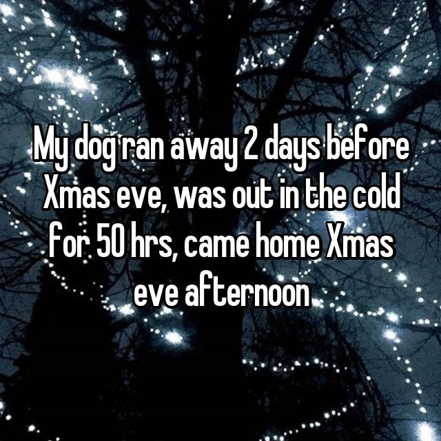 Text - Mydoginan away 2 days bef ore Xmas eve, was outin the cold for 50 hrs, came home Xmas eve afternoon.