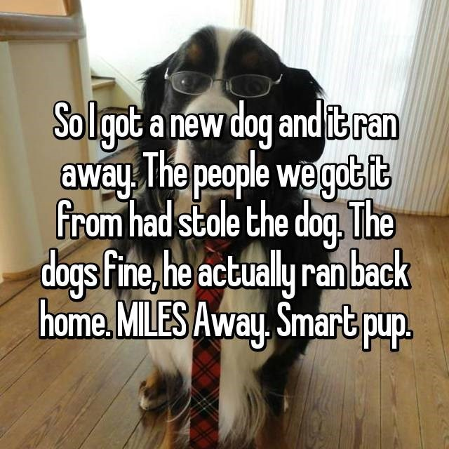 Text - Solgot a new dog and itran away The people wegotit From had stole the dog. The dogs Fine, he actualy ranback home MILES Away Smart pup.