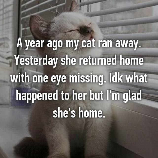 Cat - A year ago my cat ran away. Yesterday she returned home with one eye missing. Idk what happened to her but I'm glad she's home.