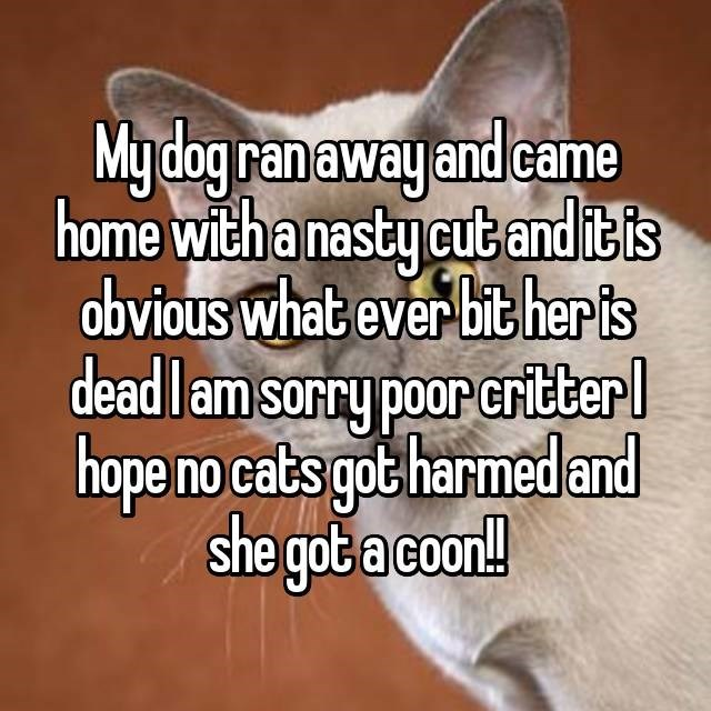 Text - My dog ranaway and came home with a nasty cut and it is obvious what ever bit heris dead l am sorry poor critber hope no cats got harmedand she got a coon!