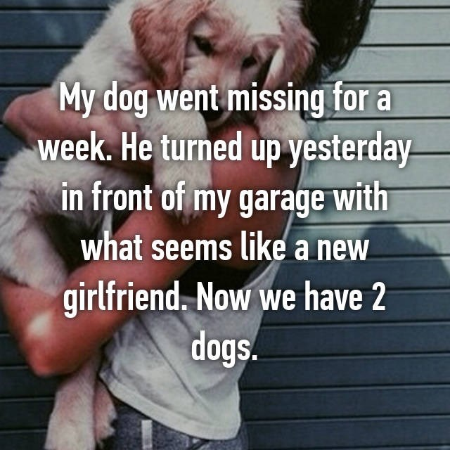 Photo caption - My dog went missing for a week. He turned up yesterday in front of my garage with what seems like a new girlfriend. Now we have 2 dogs.