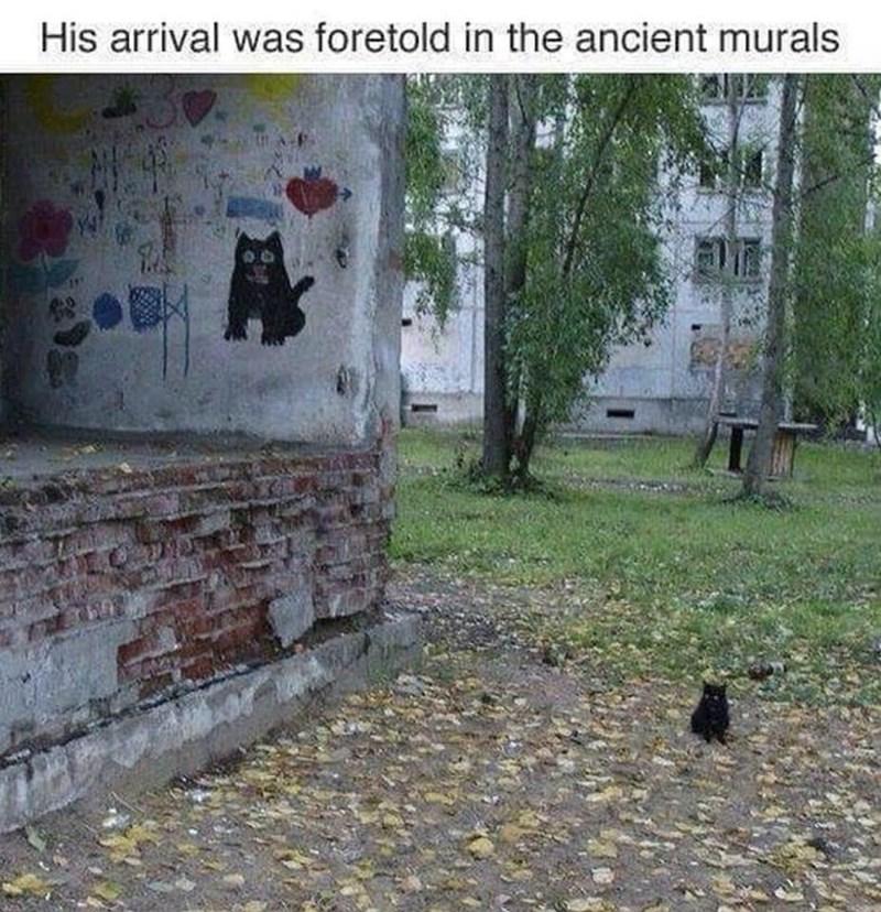 Funny memes cat.