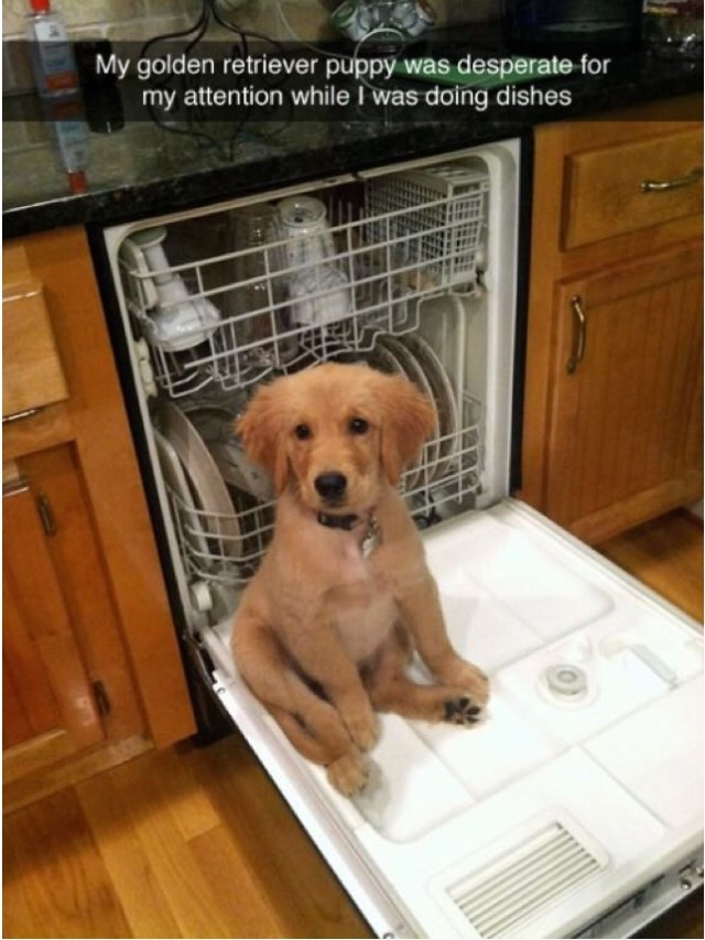 "Snapchat text overlay that reads, ""My golden retriever puppy was desperate for my attention while I was doing the dishes"" over a pic of a cute puppy sitting in the dishwasher"