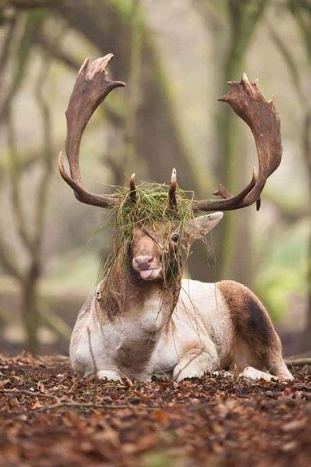 derping animals - Horn