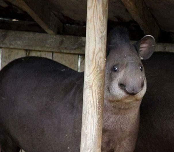derping animals - Mammal