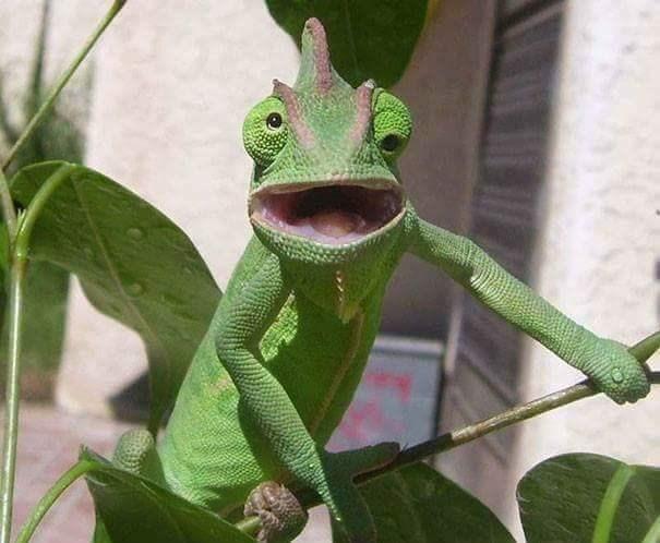 derping animals - Reptile