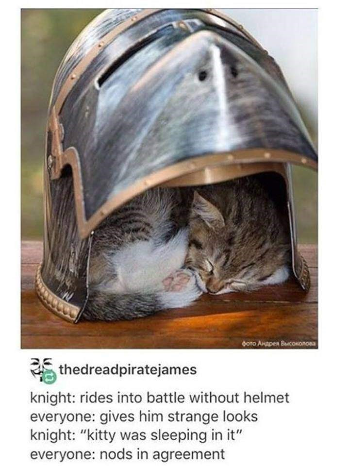 """cat meme - Helmet - Boto AnApen BiconoRcsa thedreadpiratejames knight: rides into battle without helmet everyone: gives him strange looks knight: """"kitty was sleeping in it"""" everyone: nods in agreement"""
