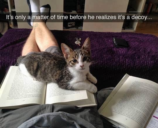 cat meme - Cat - It's only a matter of time before he realizes it's a decoy...