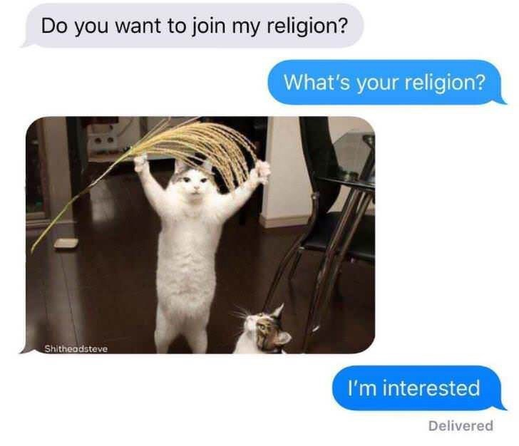 cat meme - Adaptation - Do you want to join my religion? What's your religion? Shitheadsteve I'm interested Delivered