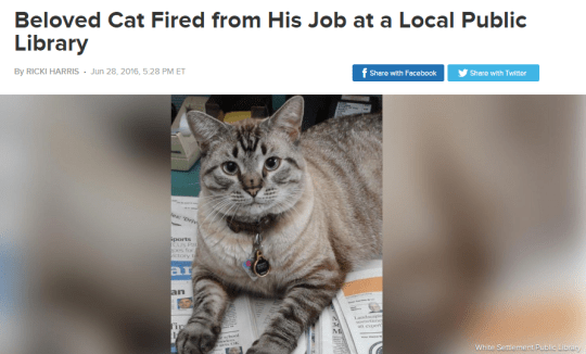 cat meme - Cat - Beloved Cat Fired from His Job at a Local Public Library f Shere with Facebook By RICKI HARRIS- Jun 28, 2016, 528 PM ET Share with Twiter ports CS Pag ory ar an Tic M White Setiement Public Librac