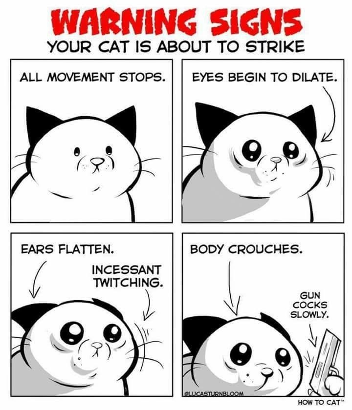 cat meme - Facial expression - WARNING SIGNS YOUR CAT IS ABOUT TO STRIKE ALL MOVEMENT STOPS EYES BEGIN TO DILATE EARS FLATTEN. BODY CROUCHES. INCESSANT TWITCHING GUN COCKS SLOWLY LaLuCASTURNBLOOM HOW TO CAT