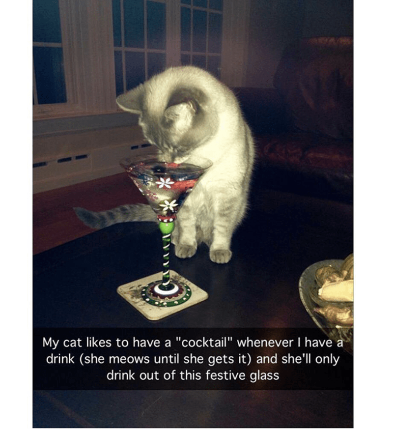 """cat meme - Cat - My cat likes to have a """"cocktail"""" whenever I have a drink (she meows until she gets it) and she'll only drink out of this festive glass"""