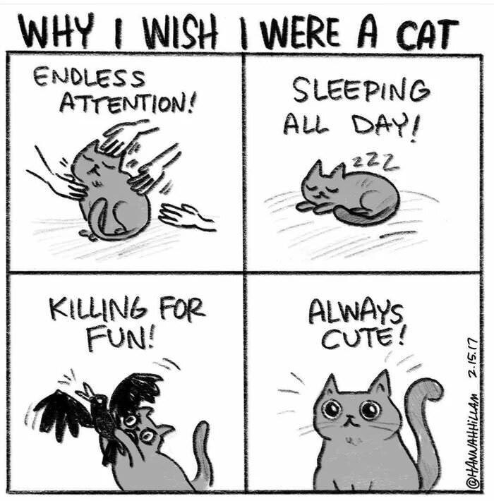 cat meme - Text - WHY I WISH I WERE A CAT ENDLESS ATTENTION! LEEPING ALL DAY! 222 KILLING FOR FUN! ALWAYS CUTE! @HANNAHHILLAM 2.15.(7