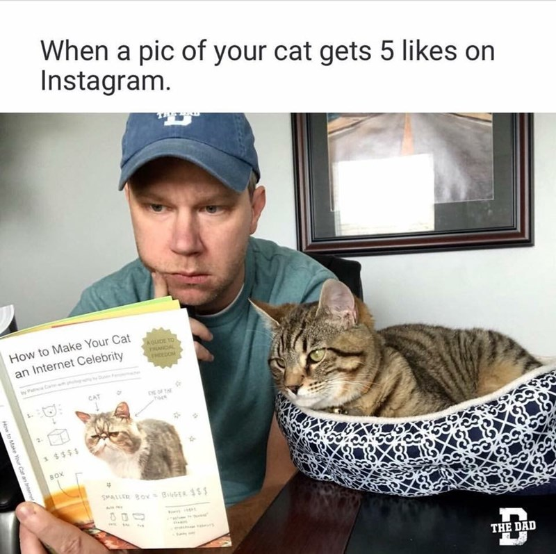 cat meme - Cat - When a pic of your cat gets 5 likes on Instagram. How to Make Your Cat AGUIDE TO RANCIAL HEEDOM an Internet Celebrity ay Pat Ca $$$ BOX SMALLER BOYBR S THE DAD How to Make Your Cat an Interneta