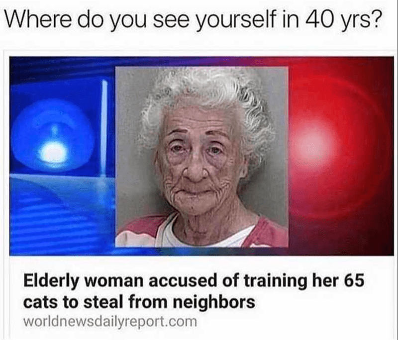 cat meme - Face - Where do you see yourself in 40 yrs? Elderly woman accused of training her 65 cats to steal from neighbors worldnewsdailyreport.com