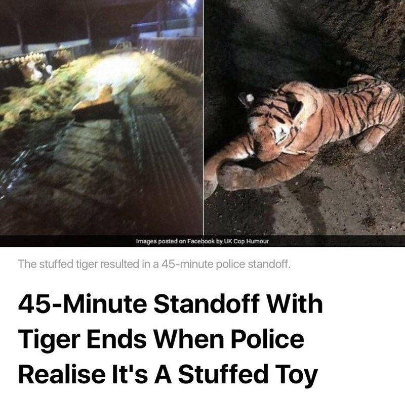 cat meme - Bengal tiger - Images posted on Facebook by UK Cop Humour The stuffed tiger resulted in a 45-minute police standoff. 45-Minute Standoff With Tiger Ends When Police Realise It's A Stuffed Toy