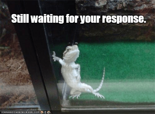 meme of cute gecko waiting for your text response
