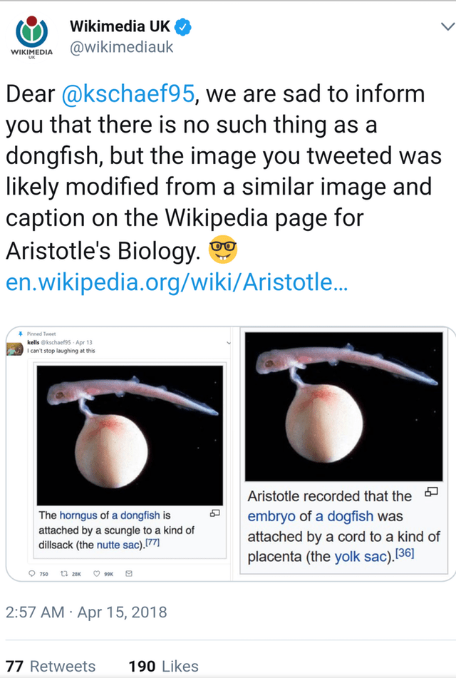 Text - Wikimedia UK WIKIMEDIA Wikimediauk Dear @kschaef95, we are sad to inform you that there is no such thing as a dongfish, but the image you tweeted was likely modified from a similar image and caption on the Wikipedia page for Aristotle's Biology. en.wikipedia.org/wiki/Aristotle... Pinned Tweet kells @kschaef9s Apr 13 I can't stop laughing at this Aristotle recorded that the embryo of a dogfish was attached by a cord to a kind of The horngus of a dongfish is attached by a scungle to a kind