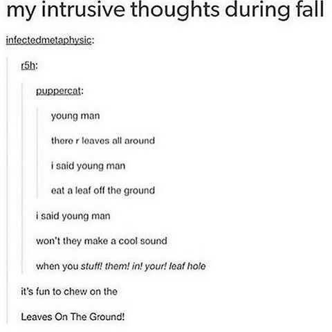 Text - my intrusive thoughts during fall infectedmetaphysic: 5h: uppercat: young man there r leaves all around i said young man eat a leaf off the ground i said young man won't they make a cool sound when you stuff! them! in! your! leaf hole it's fun to chew on the Leaves On The Ground!