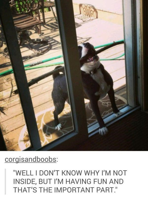 "Caption that reads, ""Well I don't know why I'm not inside, but I'm having fun and that's the important part"" below a pic of a Boston terrier holding a stick and trying to get through the door"