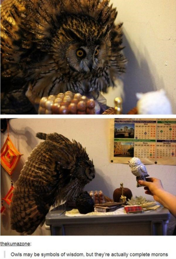 "Pic of an owl with text that reads, ""Owls may be symbols of wisdom, but they're actually complete morons"""