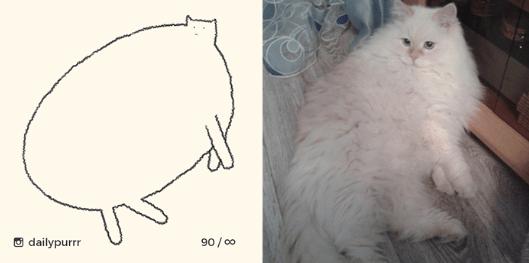 Cat - 90/00 dailypurrr