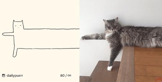 Cat - dailypurrr 80/o0