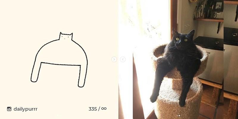 Cat - dailypurrr 335/00