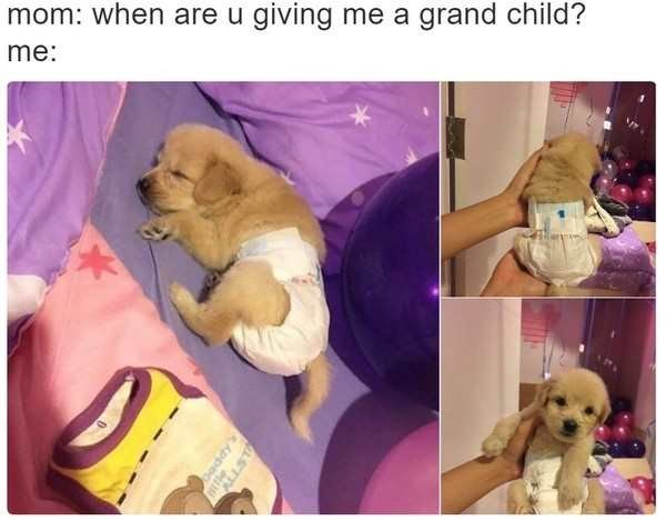Dog - mom: when are u giving me a grand child? me: Daddy