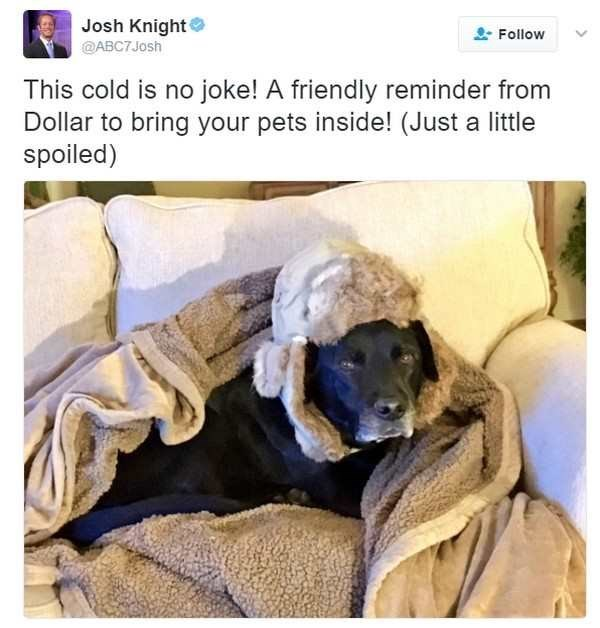 Canidae - Josh Knight @ABC7Josh Follow This cold is no joke! A friendly reminder from Dollar to bring your pets inside! (Just a little spoiled)