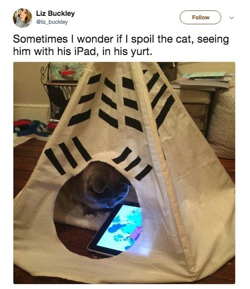 Product - Liz Buckley Follow eliz buckley Sometimes I wonder if I spoil the cat, seeing him with his iPad, in his yurt.