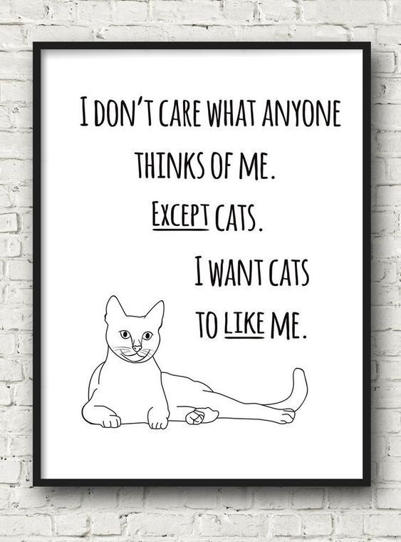 cute cat sign about only caring what cats think of you and not people