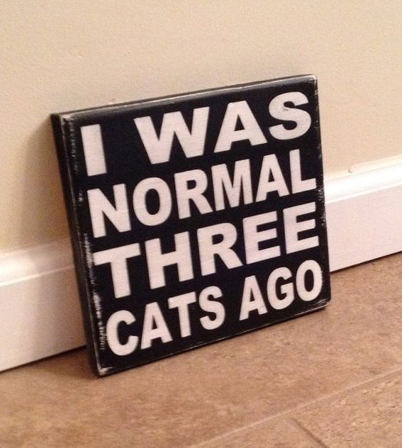 cute cat sign about being normal before having three cats