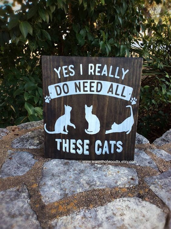 cute cat sign confirming the need for many cats