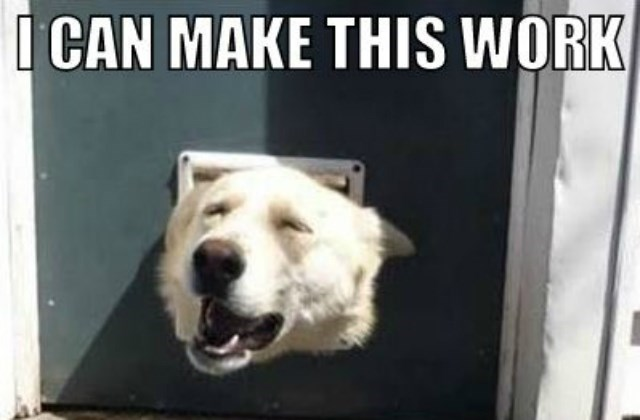 Dog - CAN MAKE THIS WORK