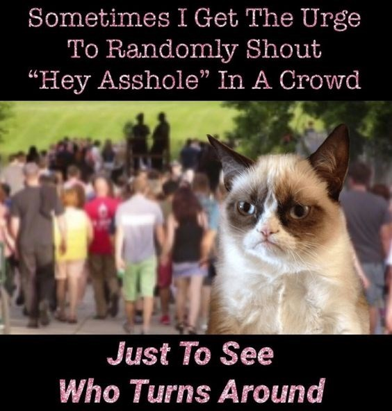 caturday meme with grumpy cat in a crowd