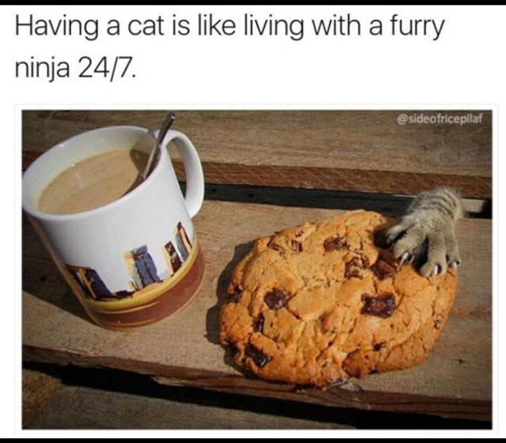 caturday meme comparing cats to food stealing ninjas