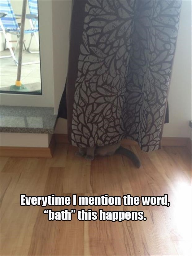 caturday meme about a cat hiding whenever it thinks it's getting a bath
