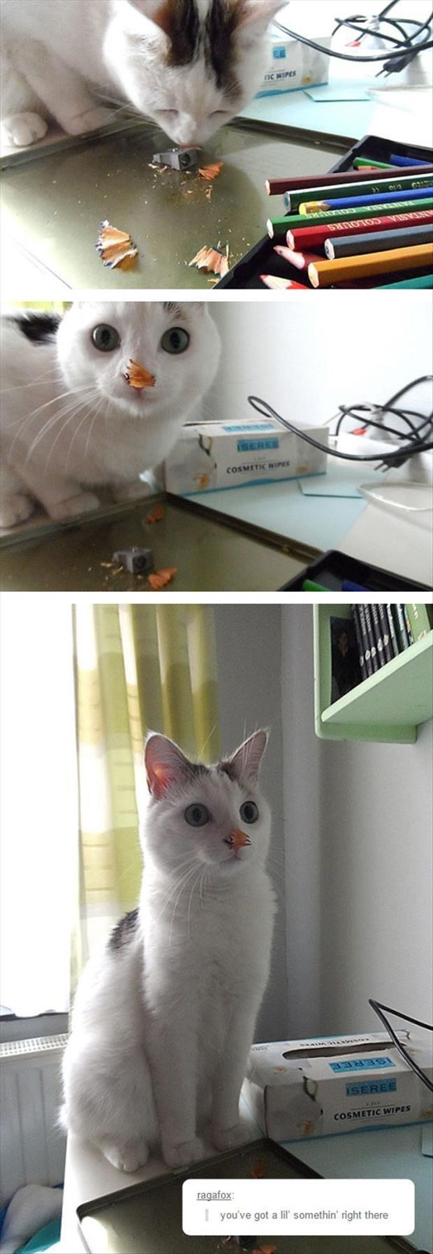 caturday meme with pics of a cat getting pencil shavings on its nose