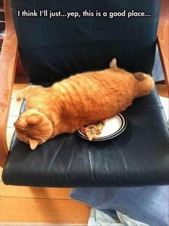 caturday meme of a cat falling asleep on a slice of pizza