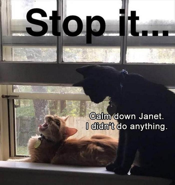 caturday meme of a dramatic cat yelling for no reason