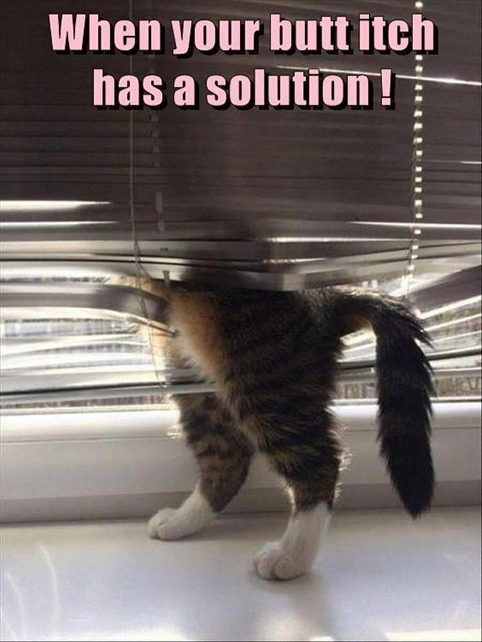 caturday meme about hiding in the blinds