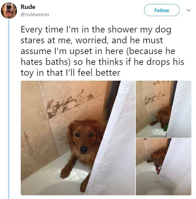 Canidae - Rude Follow @rudeweaver Every time I'm in the shower my dog stares at me, worried, and he must assume I'm upset in here (because he hates baths) so he thinks if he drops his toy in that I'll feel better