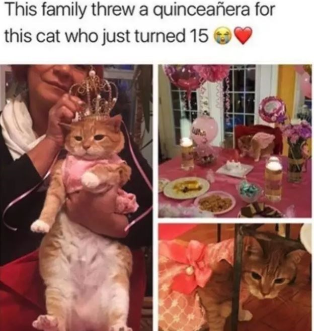 Cat - This family threwa quinceañera for this cat who just turned 15