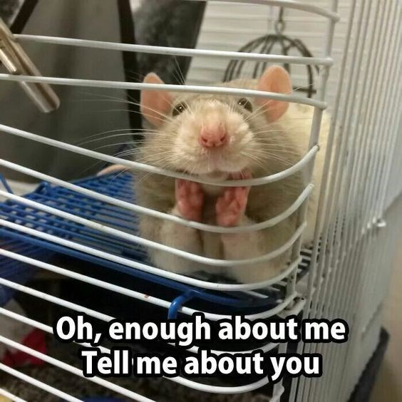 Rat - Oh, enough about me Tell me about you