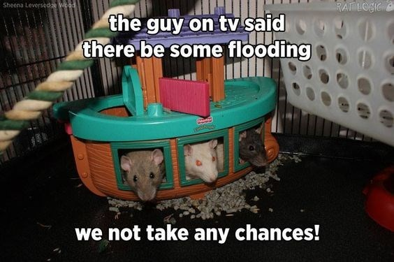 Play - RAT LOGC Sheena Leversedge Woad the guy on tv said there be some flooding we not take any chances!