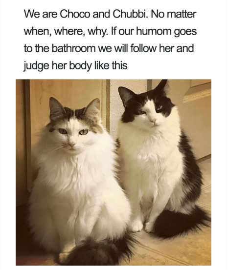 Cat - We are Choco and Chubbi. No matter when, where, why. If our humom goes to the bathroomwe will follow her and judge her body like this