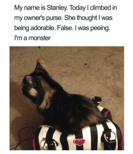 Text - My name is Stanley. Today I climbed in my owner's purse. She thought I was being adorable. False. I was peeing. I'm a monster